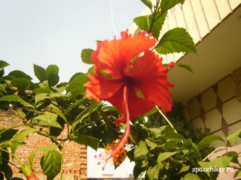 Индия, Горакпур, автостоп, путешествие